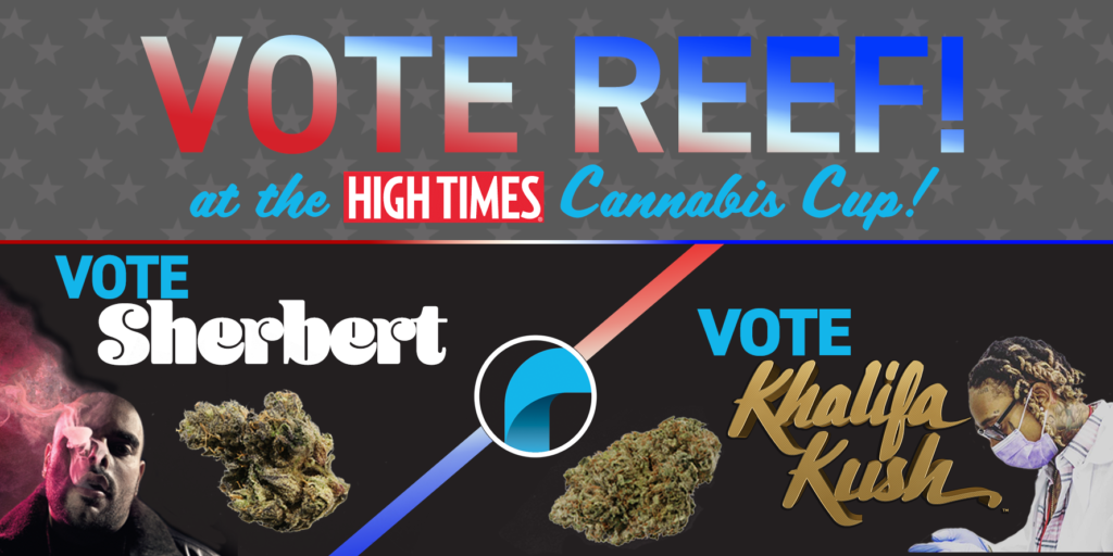 vote reef high times cannabis cup